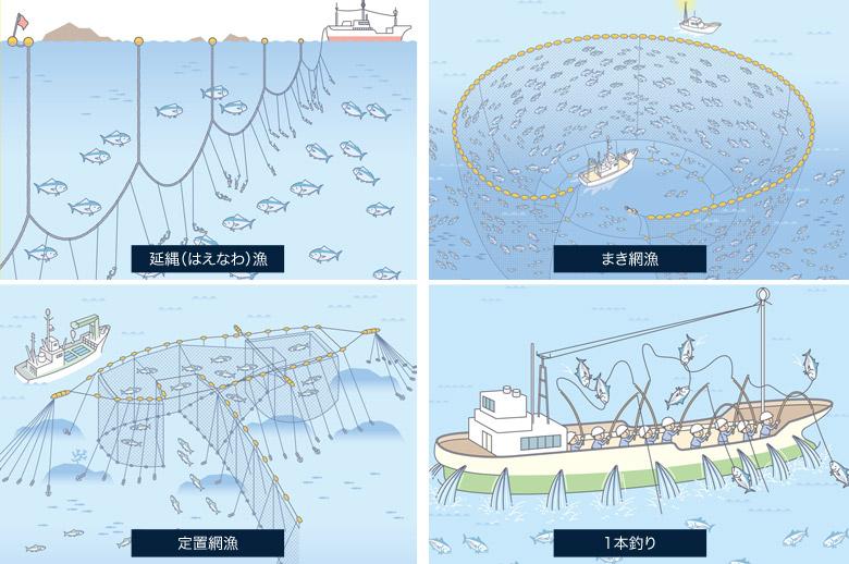 鮪の漁法は、延縄(はえなわ)漁、まき網漁、定置網漁、1本釣りの4つ