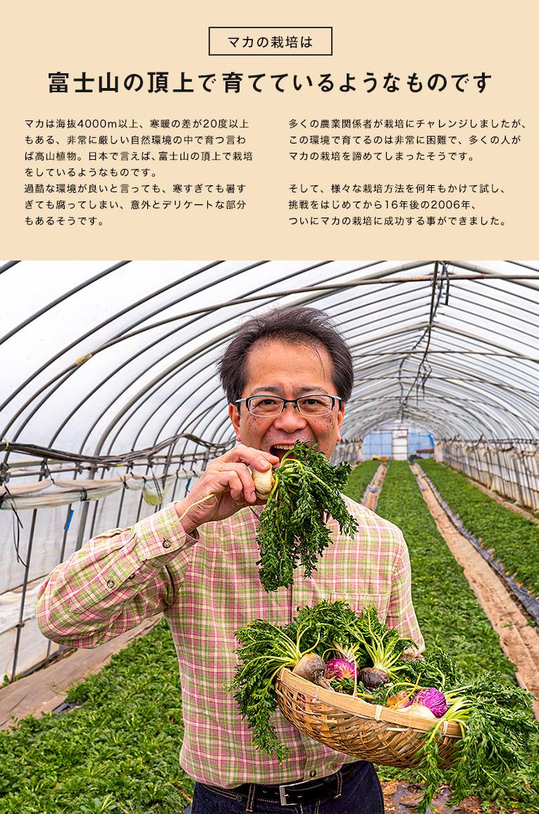 アンデスの秘草を日本人が作る。 実は、国産のマカは、ぺルーのマカとは厳密に言うと異なります。日本の土壌に合うように選抜していった結果、特別なマカになりました。いわば、スーパーマカです 1990年。日本で開催された博覧会に、ペルー政府代表として塩田哲夫(ソクラテス・シオタ)氏が来日しました。 東京生まれの塩田氏は、秋田大学在学中に2年間の南米研修に参加し、国立ペルー工科大学鉱山学部大学院を卒業。 その後も現地に留まり、ペルー厚生省種族自然医学博物館で古代薬学、国立モリーナ農科大学で資源植物学を習得した塩田氏は、アンデスを拠点に、鉱山経営と農場経営を中心に、数々のプロジェクトを手がけてきました。 帰朝した塩田氏は、日本の農業関係者に働きかけ、日本の農業技術や植物生態の知識を活かして、中央アンデスの有用植物資源の保全と開発のために力を貸して欲しいと要請しました。