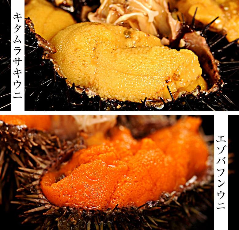 鮨屋で扱うウニの種類は大きく2つ<br> キタムラサキウニとエゾバフンウニ