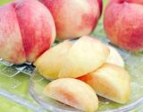 『大藤の浅間白桃』山梨県産 特秀品 約1.5kg(5〜8玉)※常温