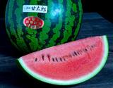『甘太郎(かんたろう)スイカ』 千葉・富里産 1玉 3〜4Lサイズ 約8kg A品