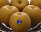 『自信作(豊水)』 糖度13度以上 栃木那須野産 約2.5kg(4〜6玉)※冷蔵