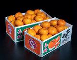 JA長崎せいひ 長崎県産みかん『味ロマン』多少のキズ有   2S〜Mサイズ 約2.5kg×2箱 ※常温