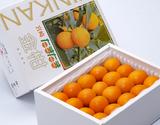 完熟金柑『たまたま』宮崎県産 秀品 L〜2Lサイズ 約1kg