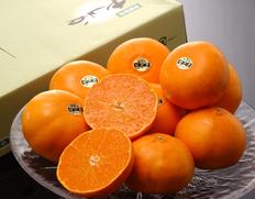 みかん・柑橘コーナー