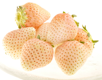 透き通るような美しい見た目だけでなく、香り・食感・甘さも秀逸佐賀県のイチゴ職人 手島靖仁さんの貴重な白イチゴ