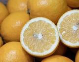 『レモネード』 静岡県産 2S〜2Lサイズ 約5kg