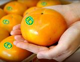 『太秋柿』熊本県産 秀品 約3.5kg(8〜14玉)産地箱
