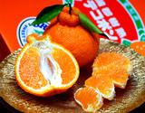 『樹熟デコポン』愛知県 蒲郡産 青秀品 約3kg (8〜12玉)化粧箱 ※常温