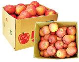 訳ありサンふじリンゴ 山形県産 約10kgバラ詰め(26〜54玉)