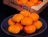 JA紀の里『たねなし柿(中谷早生)』 和歌山産 秀品 約2kg×2箱(1箱:10〜12玉)※常温