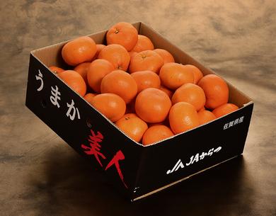 温室みかんの生産量日本一の産地が誇るブランドみかん全て光センサー選果で美味しさ保証