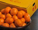 『俊菓(しゅんか)』和歌山県産 橋爪流栽培みかん 2S〜Mサイズ 約2.5kg ※常温
