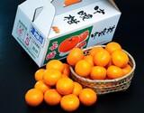『津之輝(つのかがやき)』長崎県産柑橘 2S〜Lサイズ 約2.5kg ※常温
