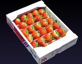 『さぬきひめ』 香川県産いちご 約1kg (25〜42粒) ※冷蔵
