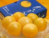 『稀色スイートピュア(黄色)』 静岡県産フルーツトマト 約900g ※常温