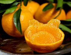 柑橘コーナー