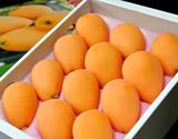 協賛価格 『長崎早生』 長崎県産枇杷(びわ) L〜2L (9〜12玉) 化粧箱 ※冷蔵