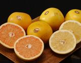 『ゴールデンクラウングレープフルーツ』フロリダ産 ルビーレッド(赤)&ホワイト(白)各1箱 合計約5kg(1箱 約2.5kg:6〜8玉入り) ※常温