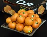 『オア』 イスラエル産 オレンジ 約2kg(14〜20玉)※常温