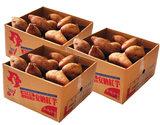 『安納紅芋』鹿児島県種子島産 訳あり小玉 約1.5kg×3箱
