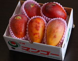 『訳あり沖縄マンゴー』沖縄県産 マンゴー 約1.5kg(3〜6玉)産地箱入 ※常温