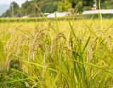 特別栽培米『天栄米』福島県産コシヒカリ 5kg 白米【令和元年度産】