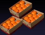 訳あり『おけさ柿』新潟県産 約2kg(10玉前後)×3箱 簡易包装 ※常温
