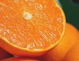 訳あり『せとか』佐賀県産柑橘 約2.5kg スレ傷あり・サイズ不揃い ※常温