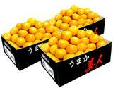 【朝日マリオン】JAからつ『うまか美人』佐賀県産みかん 約2.5kg×3箱 小玉2S〜3Sサイズ