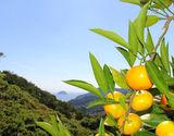 愛媛県中島産 農音の訳ありみかん 約3kg(目安27〜33玉) S〜Lサイズ 常温 産地直送