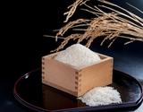 『新之助』 新潟県産 白米 5kg×2袋 ※常温