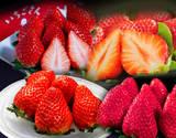 【朝日マリオン】第一弾『ブランドいちご4品種食べ比べ』 約1kg(いちごさん、あまおう、スカイベリー、きらぴ香)