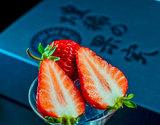 『森強さんのいちご』高知県産 大粒 約360g(9〜12粒)化粧箱 ※冷蔵