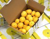 『田中雄大さんのパインみかん』熊本県産柑橘 約2kg  S〜Lサイズ(目安として22〜40玉)  ※常温