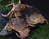 『トゲクリガニ(桜蟹)』青森県陸奥湾産 オス 約1kg ※冷蔵