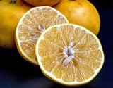 安田さんの『完熟グレープフルーツ』熊本県産 約3kg(8〜12玉)化粧箱