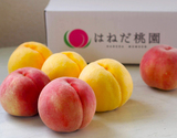 「羽根田さんの完熟大玉桃」合計約2kg(川中島白桃3玉・黄金桃3玉)糖度14度以上