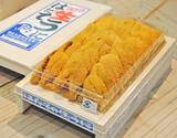 【はだて】『キタムラサキウニ』大箱 約300g 北海道またはロシア産 ※冷蔵【豊洲市場直送】