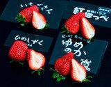 【第二弾】「ブランドいちご4品種食べ比べ」 約1kg(いちごさん、ゆめのか、ひのしずく、紅ほっぺ) ※冷蔵
