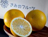 きみのフルーツ『吉瀬さんのはっさく』 和歌山県産柑橘 手選別品 L〜2Lサイズ 約9kg (30〜32玉)  ※常温