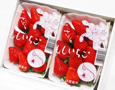 """日本一の生産量を誇る""""とちおとめ""""の後継品種見た目、甘さと酸味のバランスに優れた大粒イチゴ"""