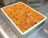 【小川】『エゾバフンウニ』弁当箱(バラ)約250g 北海道またはロシア産 ※冷蔵【豊洲市場直送】