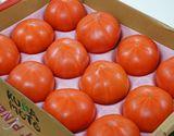 【フードロス削減】熊本県 八代産トマト または たまな産トマト LL〜3L 12玉入り×1箱 もしくは 4玉入り×3箱 約4kg(風袋込み) ※冷蔵