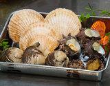 生食用 国産貝とアワビのお任せセット(4〜5種入) ※冷蔵【豊洲市場直送】