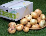 産地応援『サラダたまねぎ』熊本県津奈木町産 7kg(サイズ混合)※常温