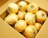 【産地応援価格】『新たまねぎ』千葉県白子町産 A品 LLサイズ 約5kg(11〜13玉程度)※常温