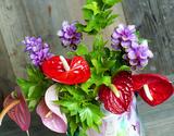 葛西市場よりお届け『7月のお花 アンスリウムセット』 国産・生花3種15本 ※常温【★】