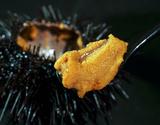 『生うに(殻付きキタムラサキ)』 青森県産または岩手県産 5個(1個100g前後) ※冷蔵
