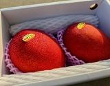 『 沖縄マンゴー』 秀品(2〜3玉)約800g 化粧箱入り ※常温 【★】